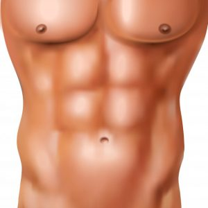 Imagens de desenho da musculatura dos Abdominais