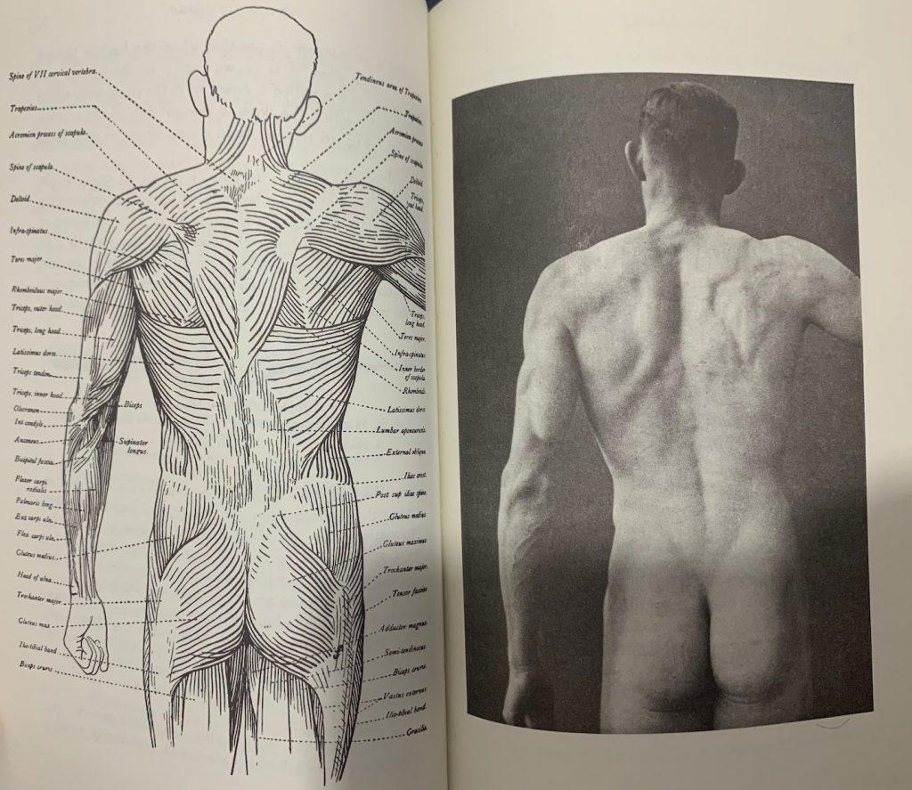 foto de modelo anatômico de corpo humano, parte posterior