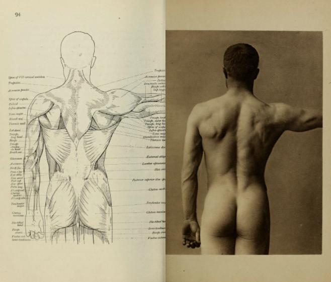 foto de parte posterior de corpo humano e desenho de modelo anatômico