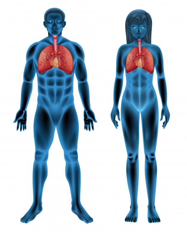 pulmōes de homens e mulheres