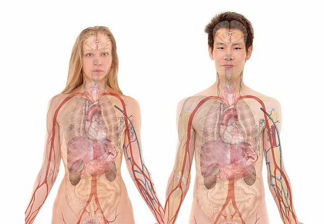 foro de homeme mulher com os sistemas corporais