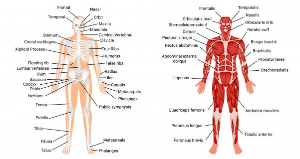sistema nervoso e osteo-articular